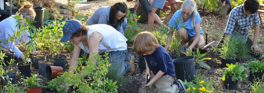 Natural Florida Gardening – Regenerative gardening that sustains ...